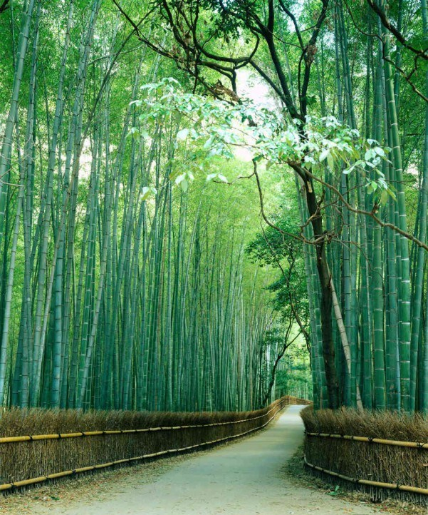 Bamboo trail mural finest wallpaper for Bamboo mural wallpaper